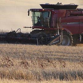 ac metcalfe barley