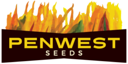 Penwest Seeds