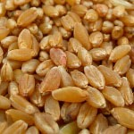 Wheat for Sale